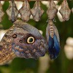 アゲハチョウの羽化する時間や季節は?